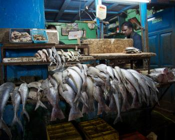 Inside the Information Society: What's happened to the price of fish?