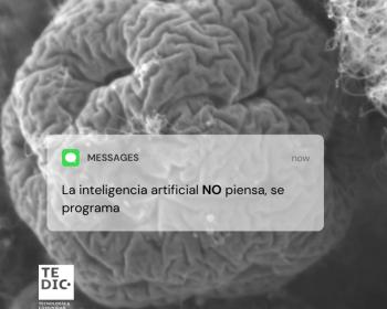 TEDIC: Inteligencia artificial en la Sala Constitucional en Paraguay
