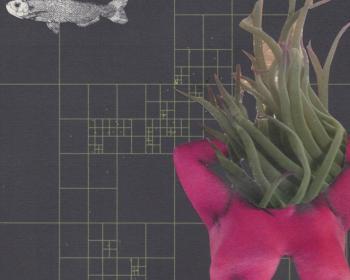 [Edición especial] Manifiesto por algoritmias hackfeministas