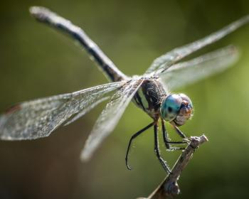 NGOs urge Google to abandon Dragonfly, a project for censorship and surveillance in China