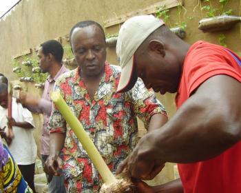 Formation en agriculture communautaire urbaine au Cameroun
