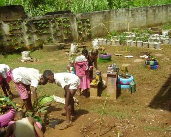 Un programme d'agriculture urbaine au Cameroun
